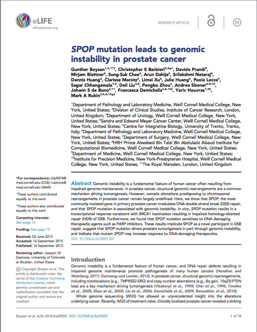 SPOP mutation leads to genomic instability in prostate cancer.png