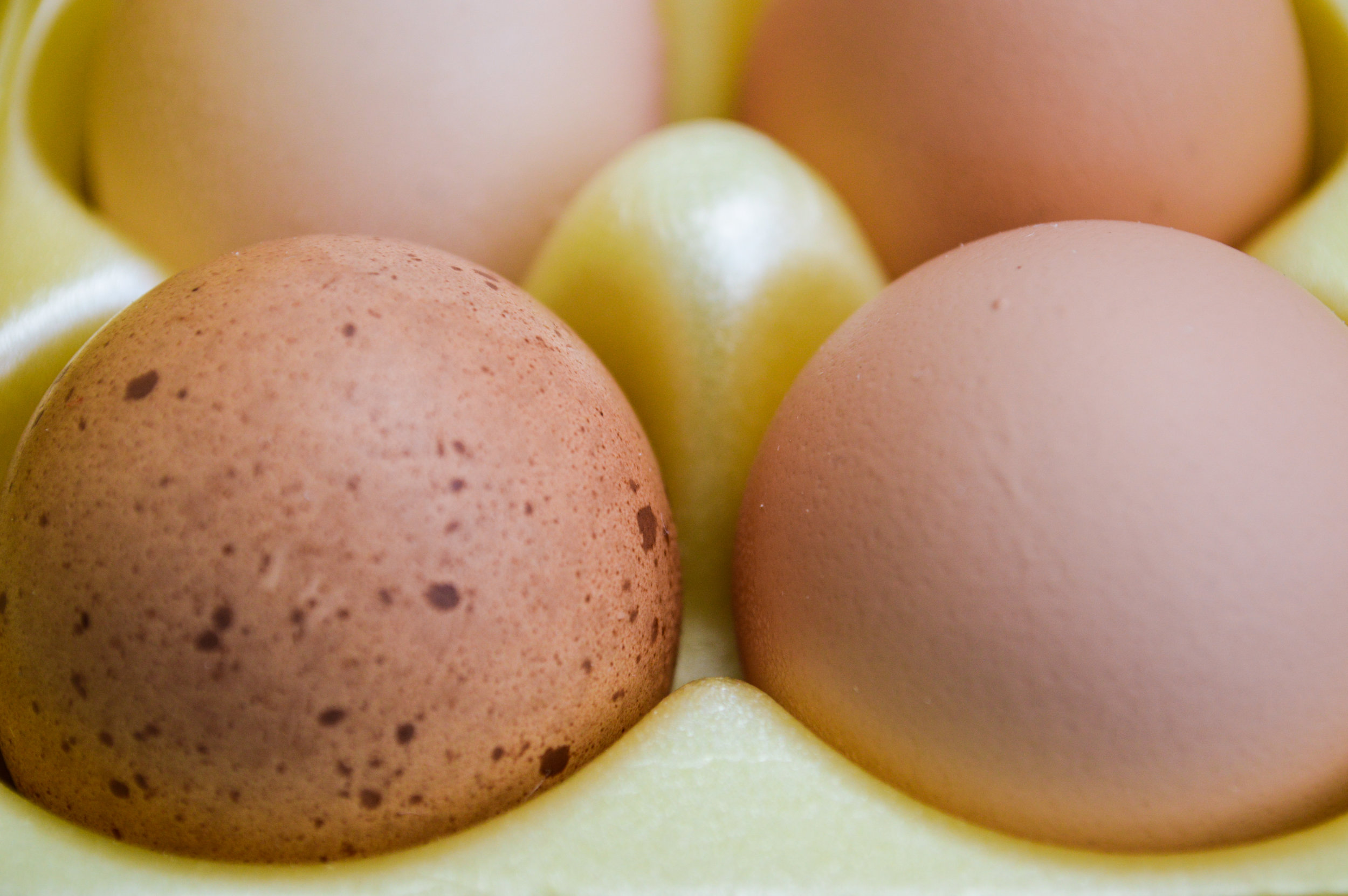 Morning Glory Farms eggs up close.jpg