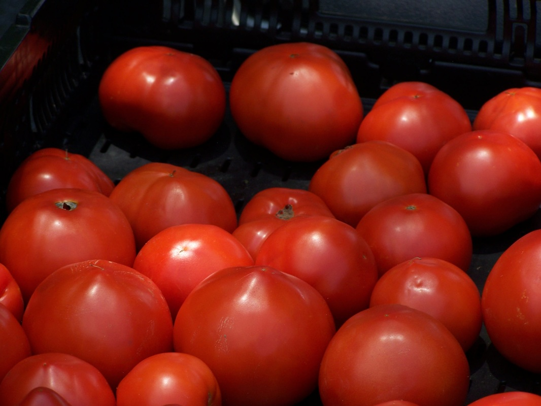Tomatoes red lots up close.jpg