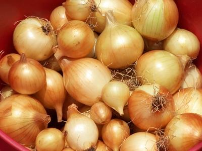 Morning Glory Onions up close lots.jpg