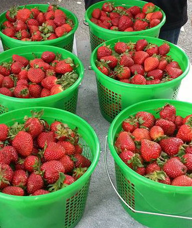 Strawberries FFF cropped.jpg