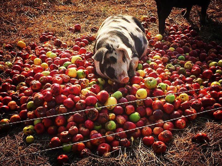 Root Down Farm 5.jpeg