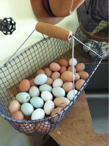 SunnysideFarm_eggs.jpg