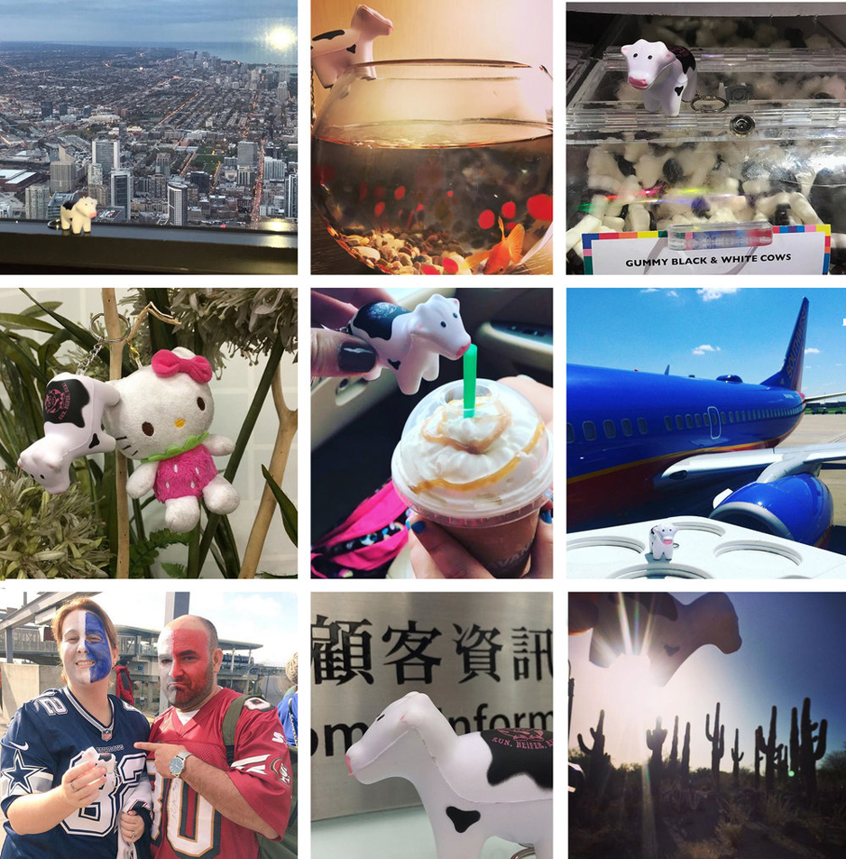 Chicago to China, Phoenix to Philadelphia, where is YOUR #heiferBelle?