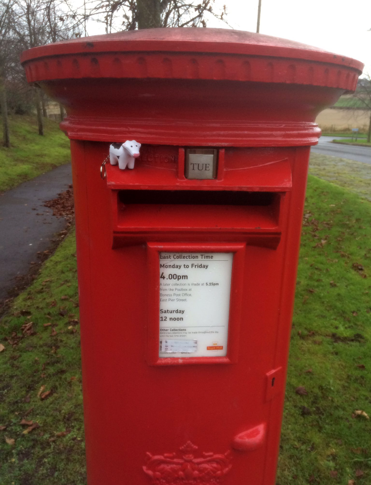 #heiferBelle hanging around on the post box in Scotland!