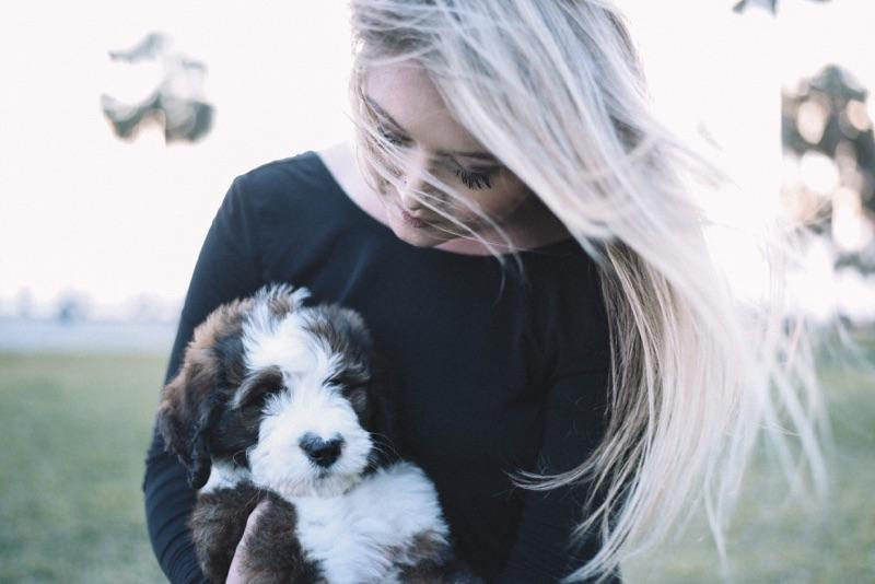 We specialize in rare colors, the Sable & White Bernedoodles are stunning!