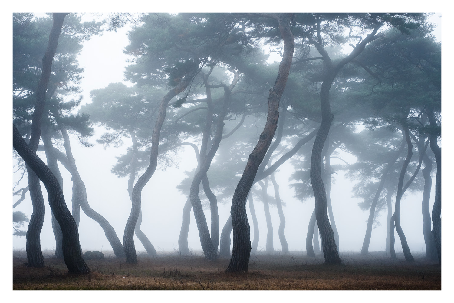 Dances of Trees.jpg