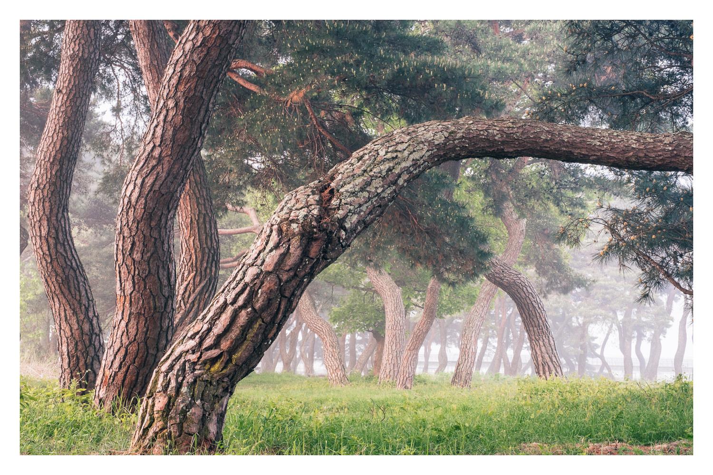 Summer-grove-asia.jpg