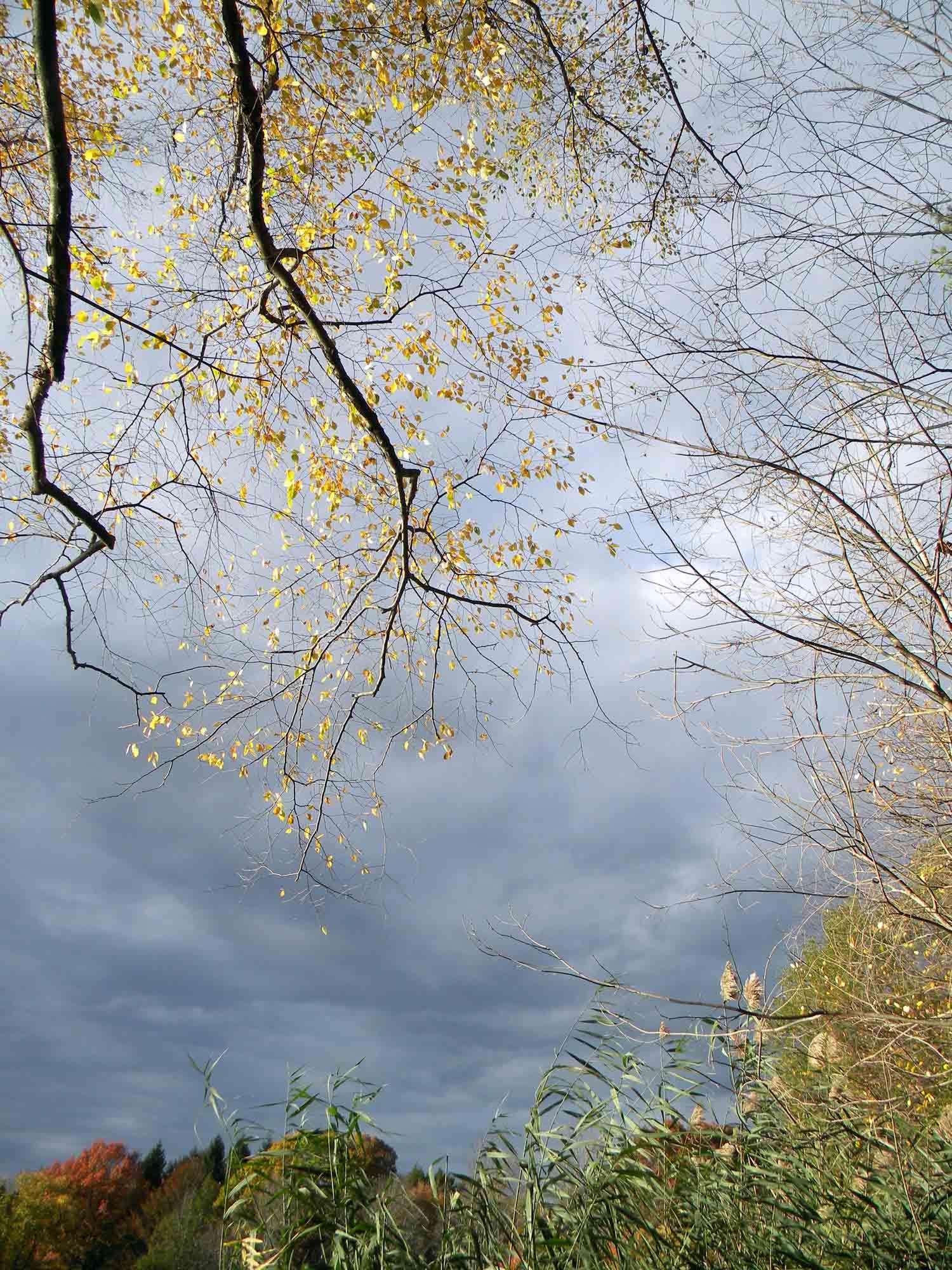 1p-autumn195-jennwood.jpg