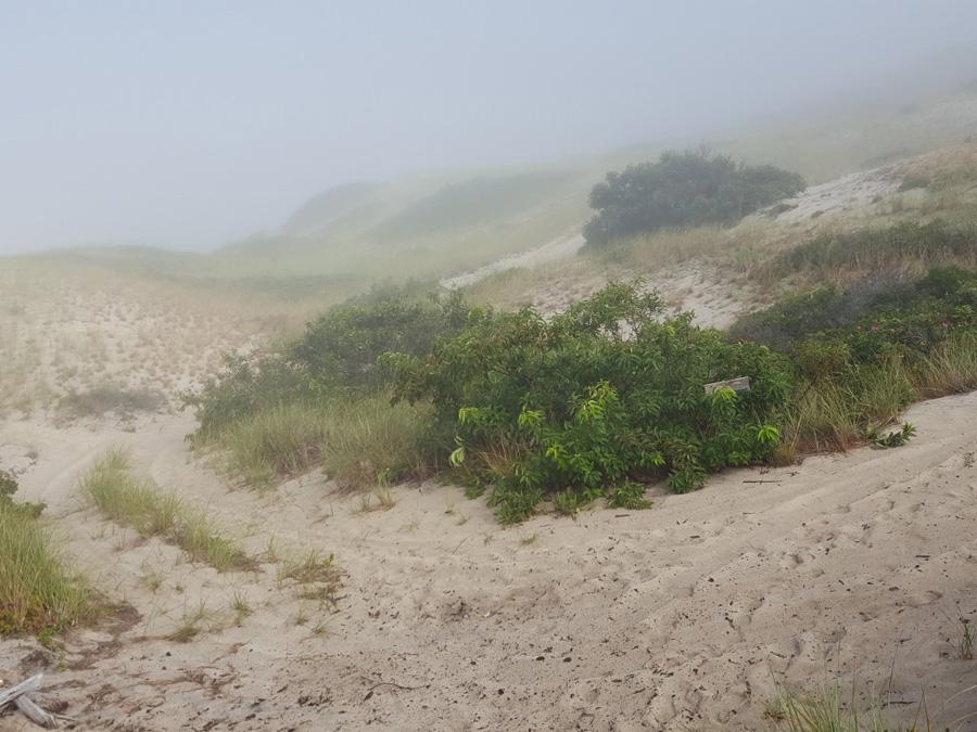 102jennwood-fog-dunes-copyright.jpg