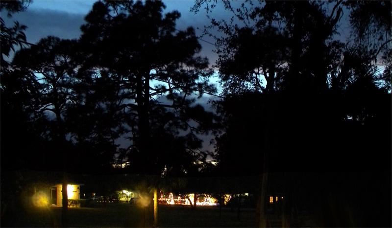 fl259night.trees.lights.stripe-jennwood-copyright.jpg