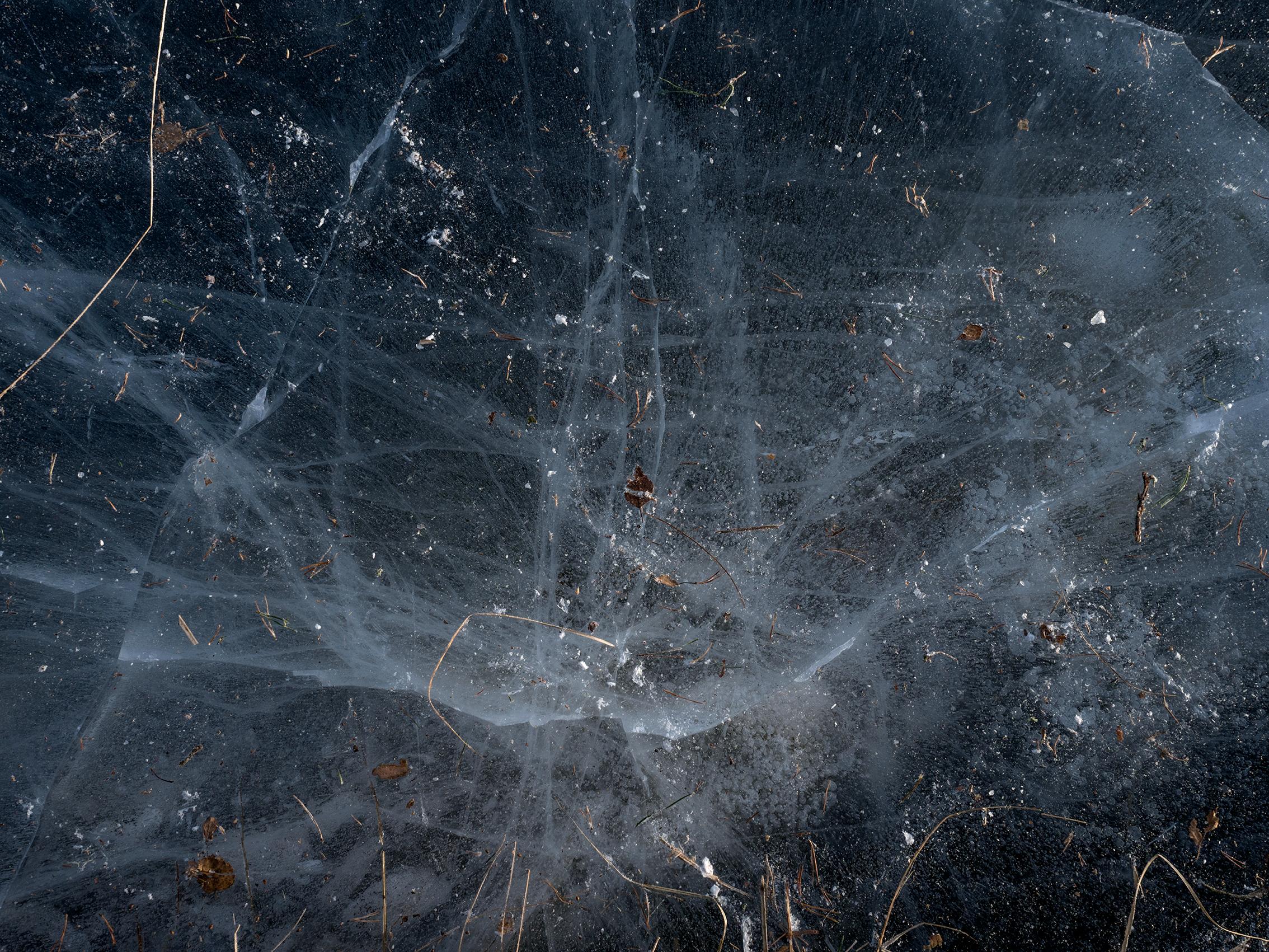 cosmos_C280110.jpg
