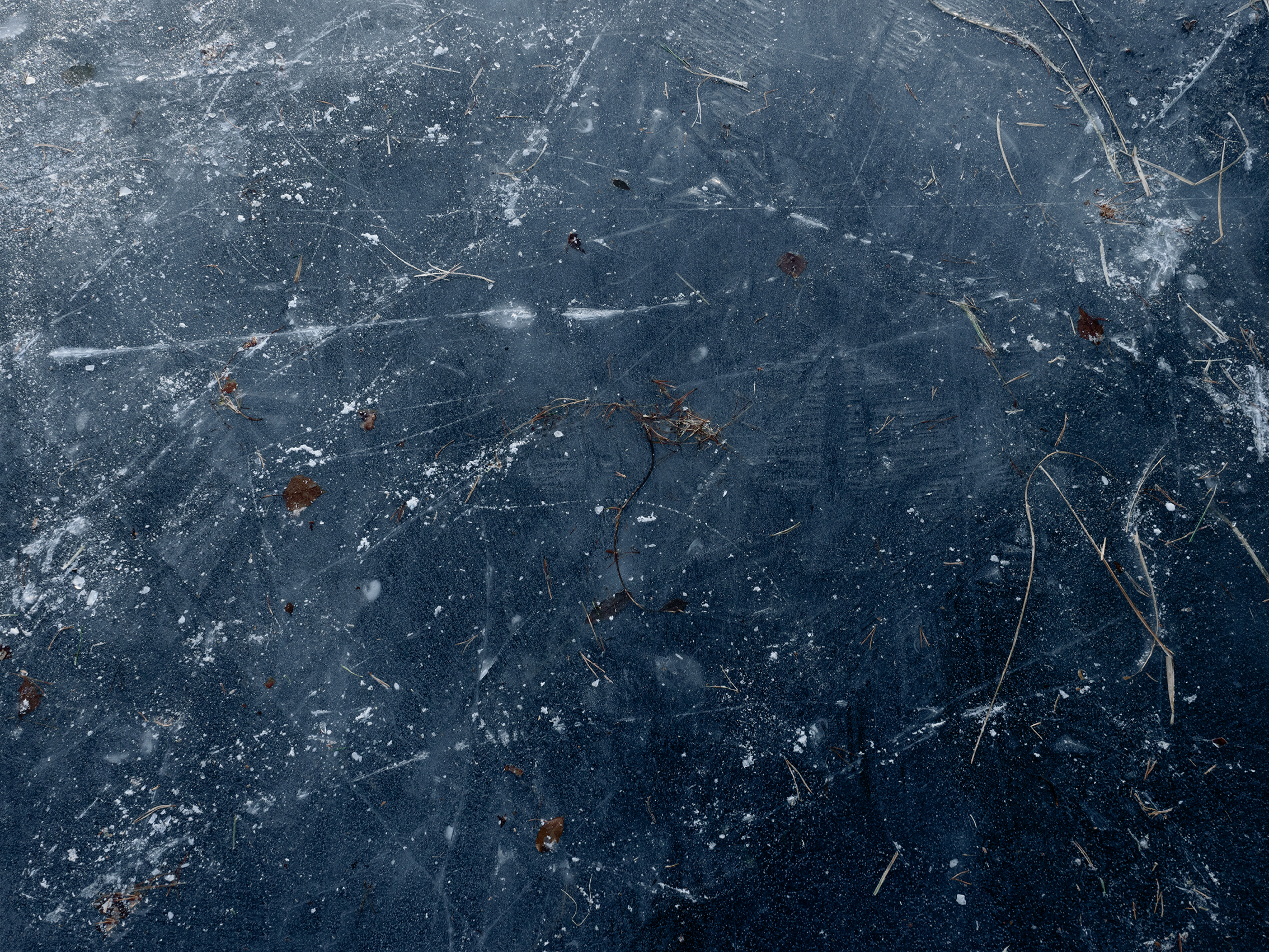 cosmos_C280124.jpg