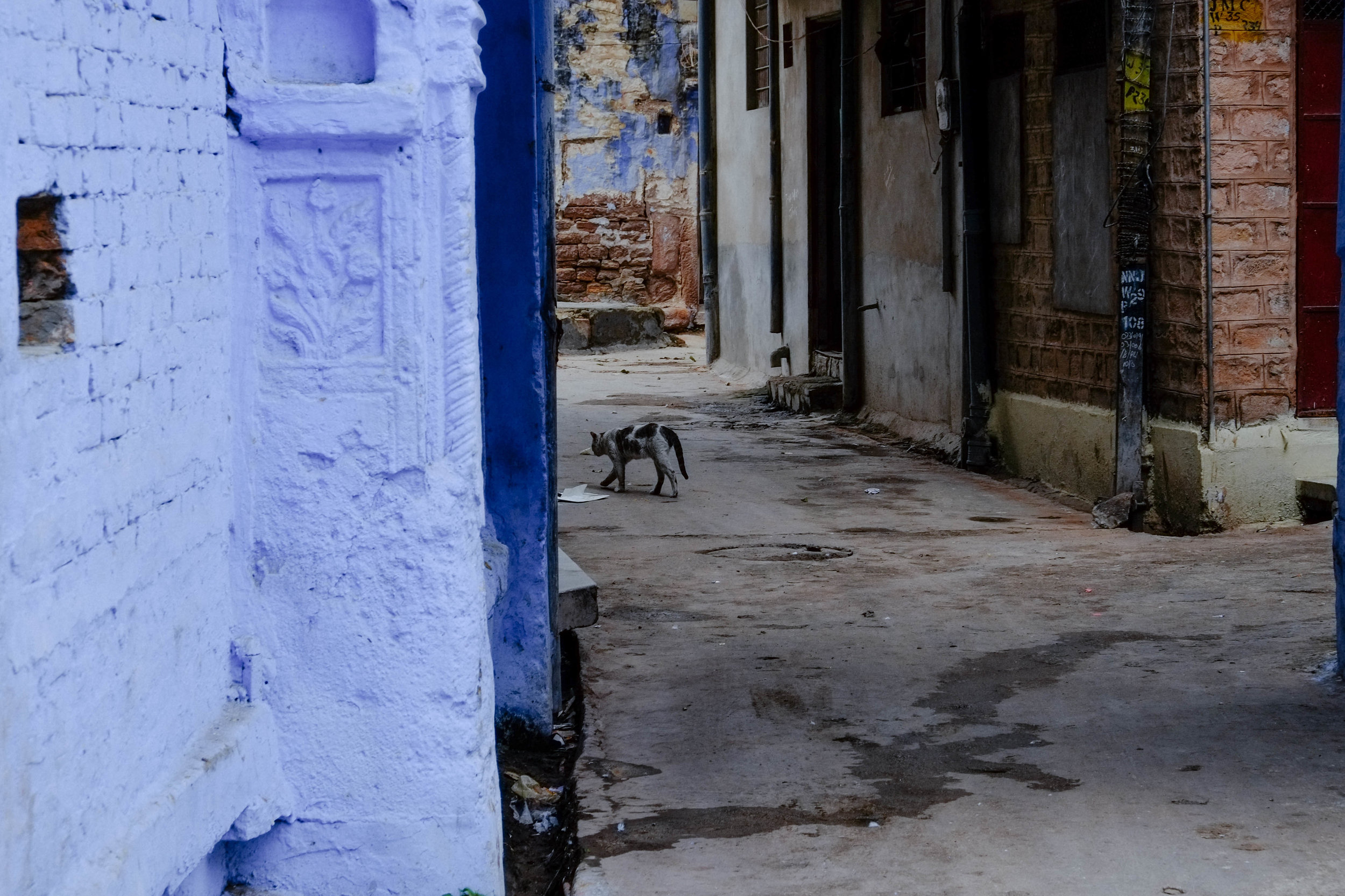 Lesly Lotha_Jodhpur 14