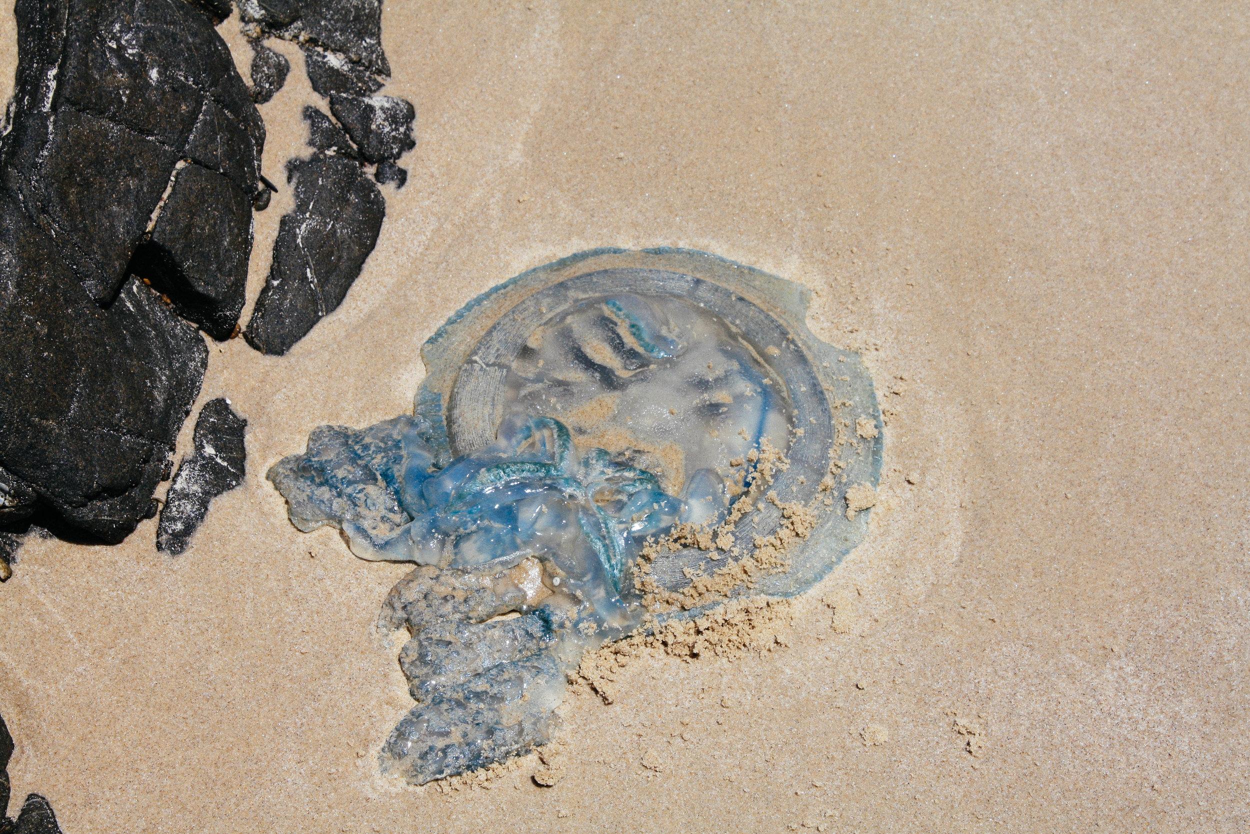 Lesly Lotha_Broken Head_Australia 10.jpg