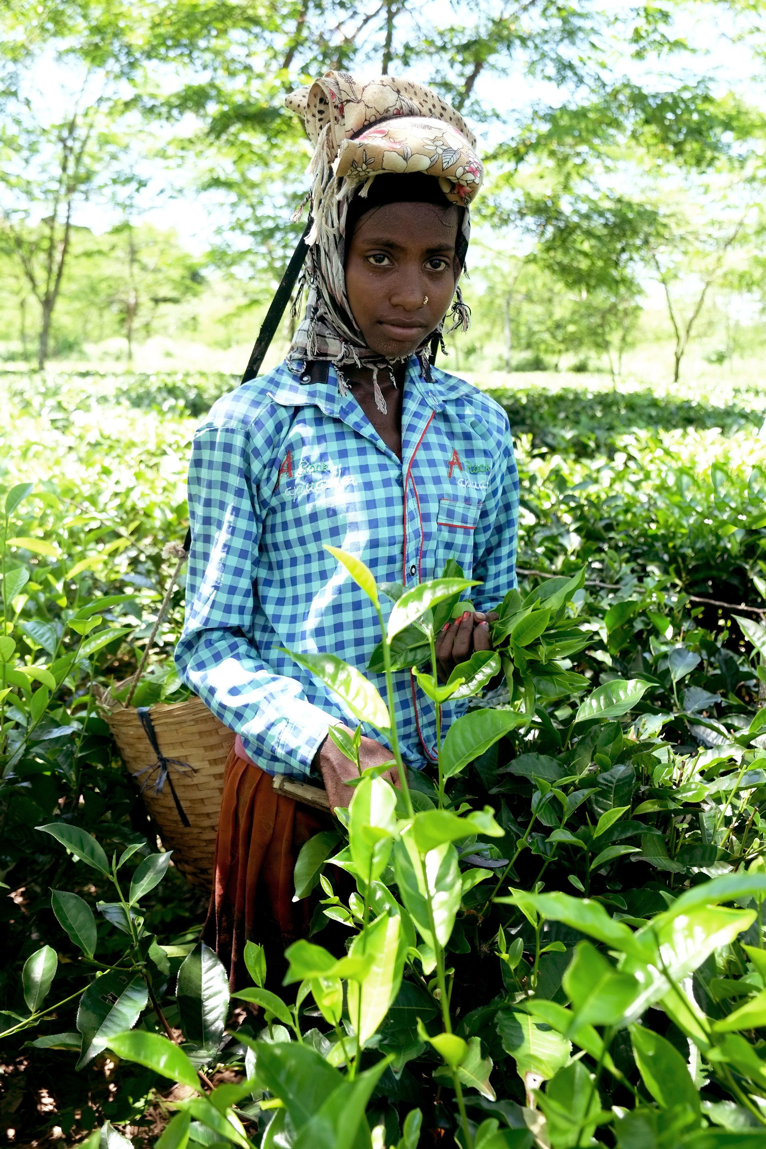 Lesly Lotha_Tea Garden_Assam_India_2016 - 01