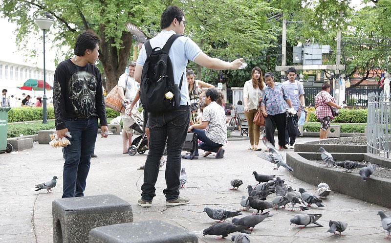 bird-food1.jpg