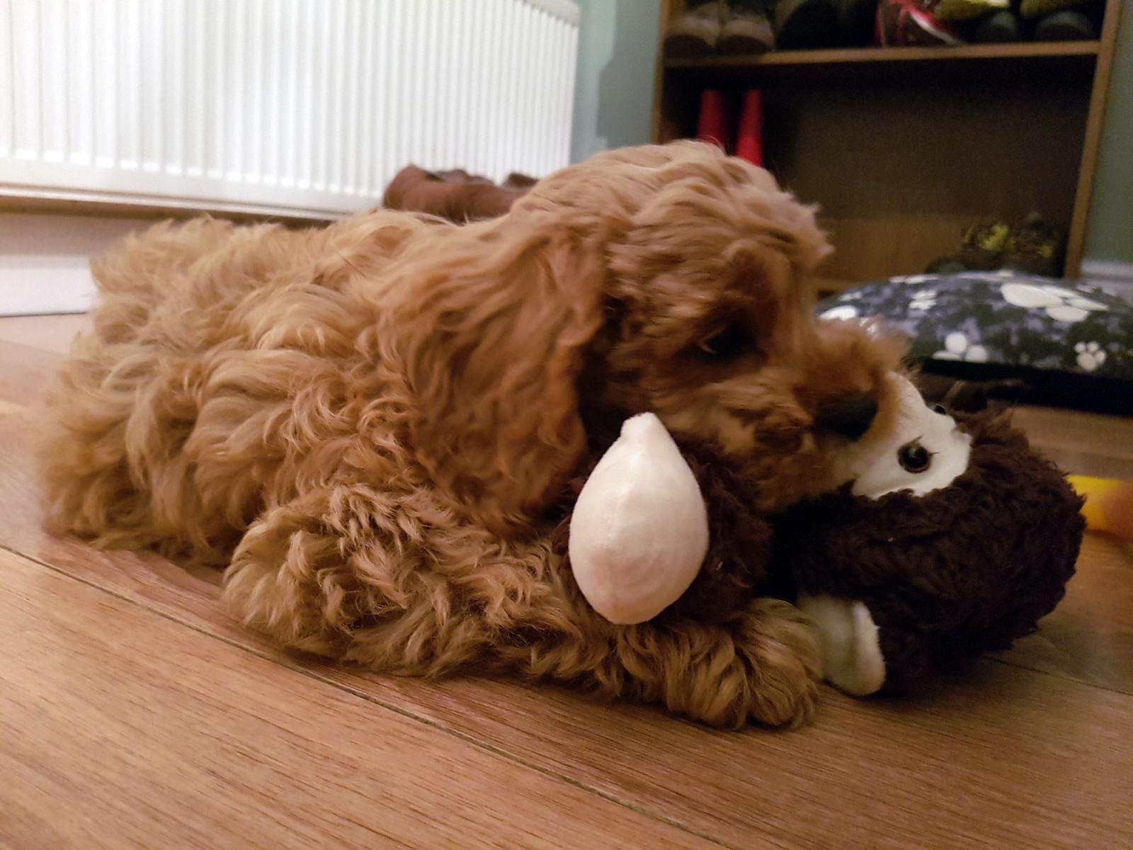 """George and the monkey! O monkey """"só aparece"""" na hora de dormir e tem o cheirinho da mamãe e irmãozinhos do George, que também dáa dica que a hora do sono chegou..."""