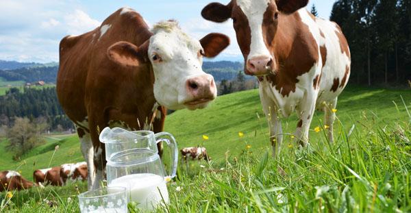 cows-milk-substitutes.jpg