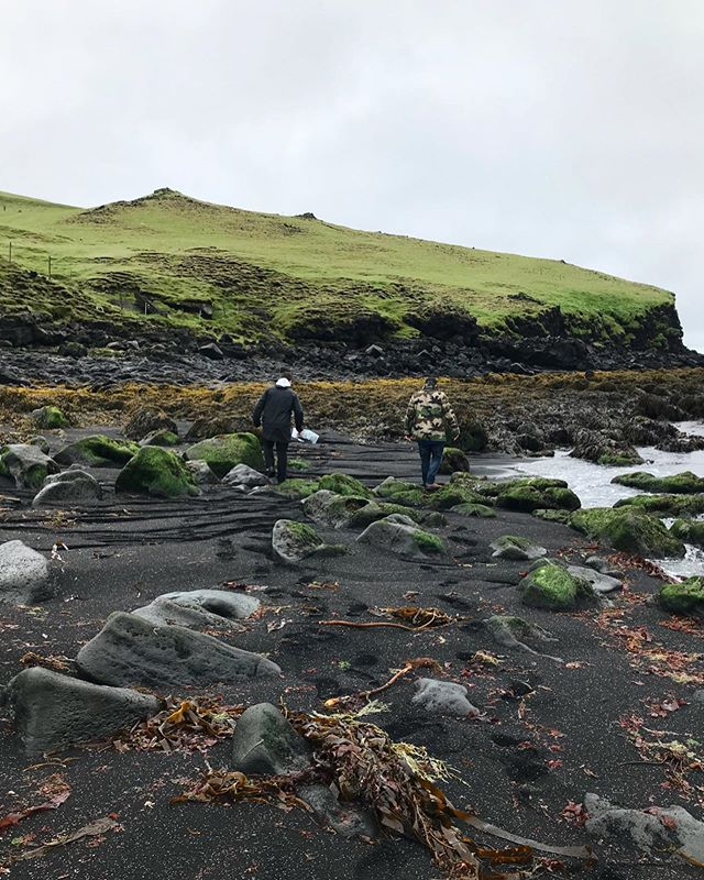 Our two talented Nordic Chefs from Issue 02, @carlkristian and @gislimatt, are on the hunt for wild and otherwise local ingredients in Vestmannæyjar🌾 . The host & creator behind these fun, creative, culinary Pop-up events is the lovely @cassiecosgrove . They have an event his Saturday, so if you are around and eager some harvesting experience. It looks so exciting🌋  @wildcaughtfound X @slippurinn . #vestmannaeyjar#westmanislands#wildcaughtfound#slippurinn#volcanicisland#wildfood#wildfoodlove#foraging#foraged#sourcetotable#foragetotable#eventsiniceland#wheniniceland#popup#popupdinner#slowfood#icelandic#icelandicingredients