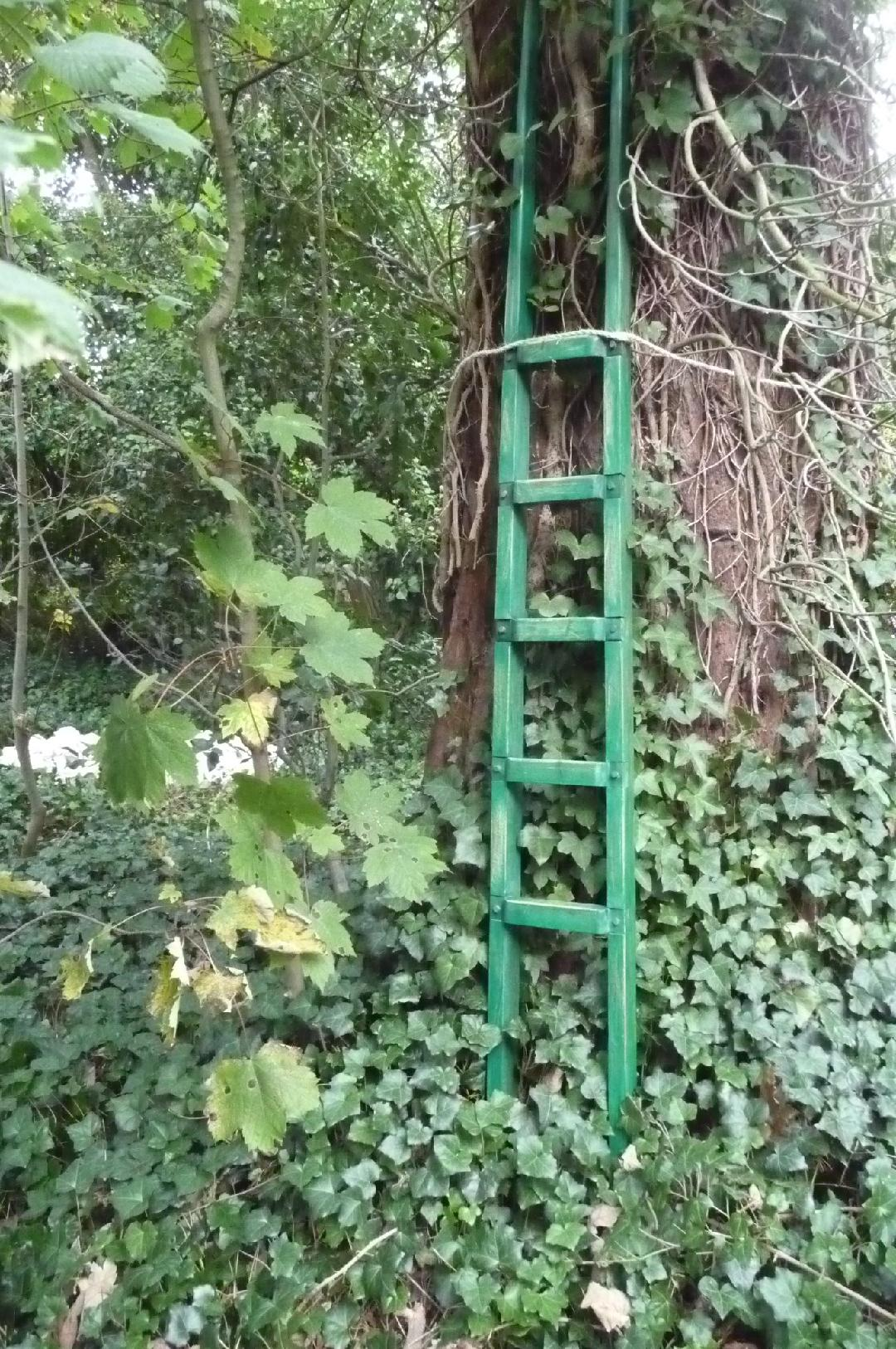 Ritual Ladder Sculpture by Tony Eastman.jpg