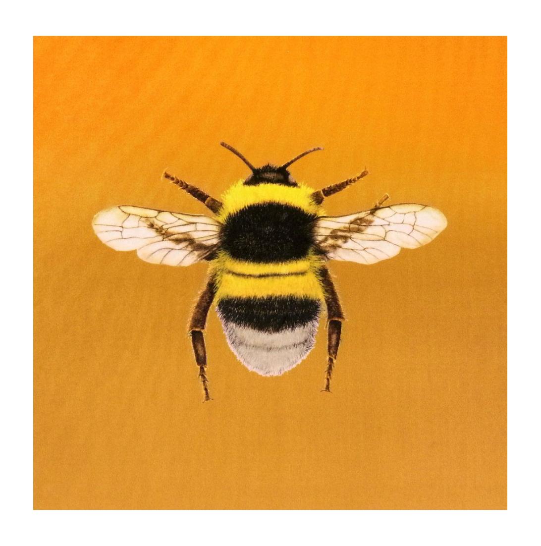 Bumblebee Gold - Velvet