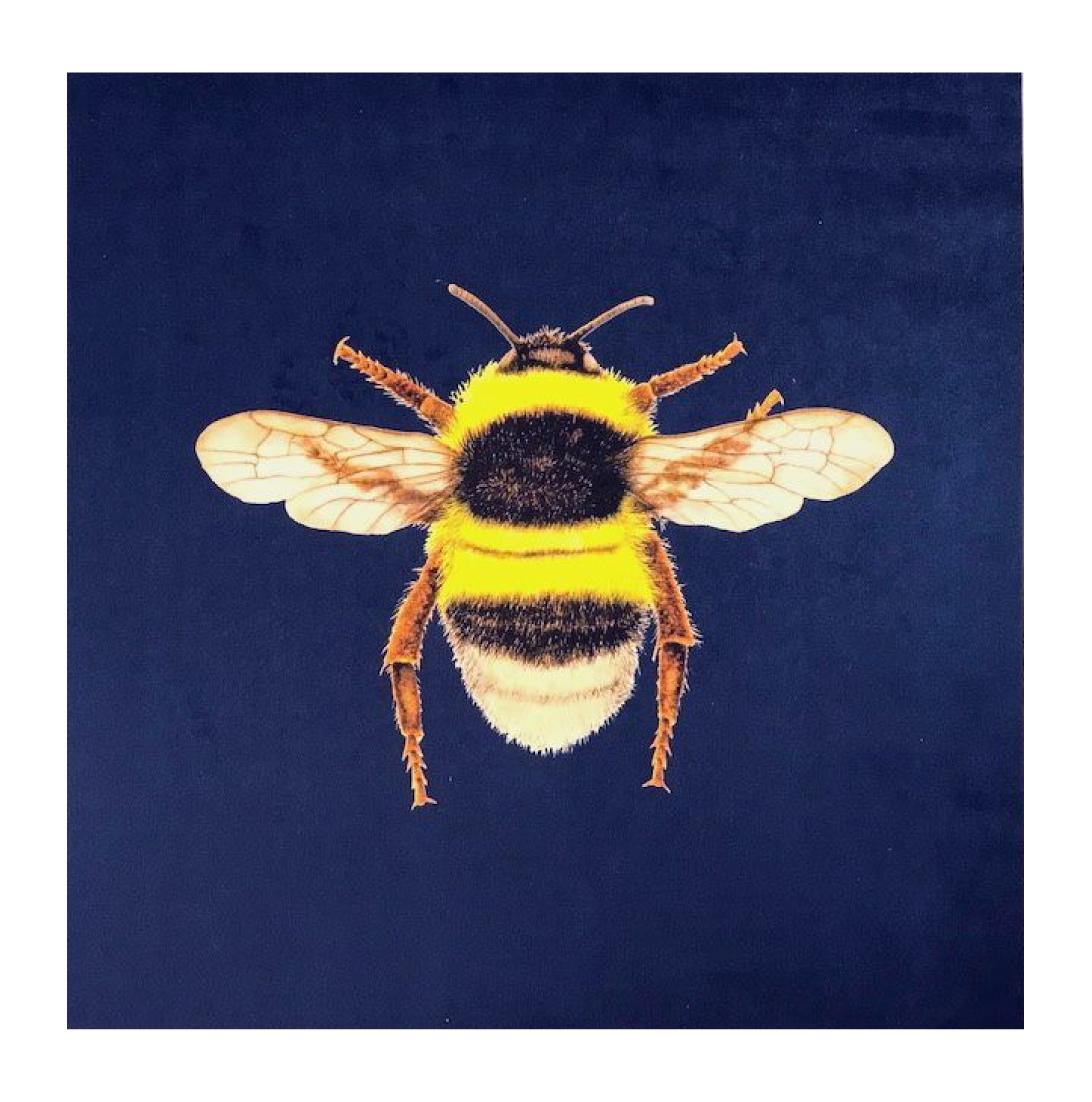 Bumblebee Navy - Velvet
