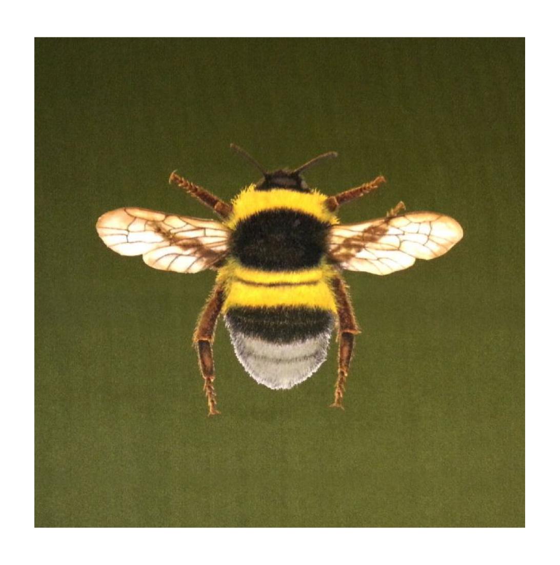 Bumblebee Olive - Velvet