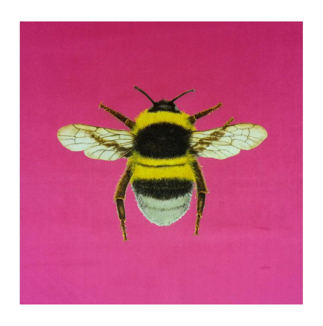 Bumblebee Sherbet - Velvet