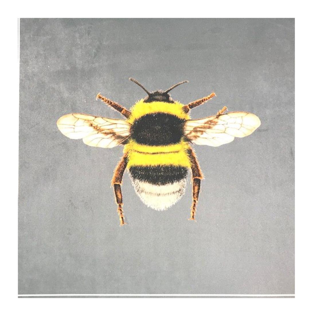 Bumblebee Silver - Velvet