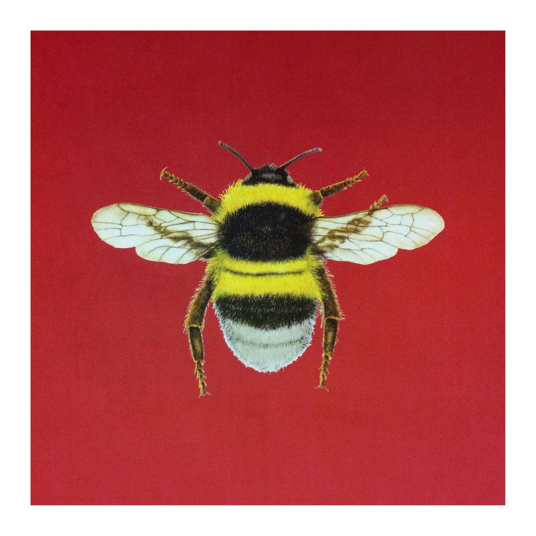 Bumblebee Strawberry - Velvet