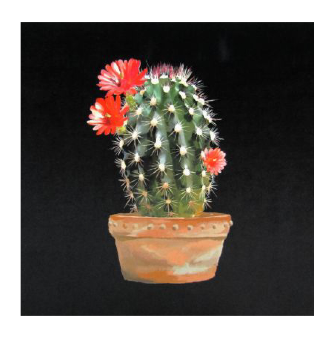 Cactus Black - Velvet