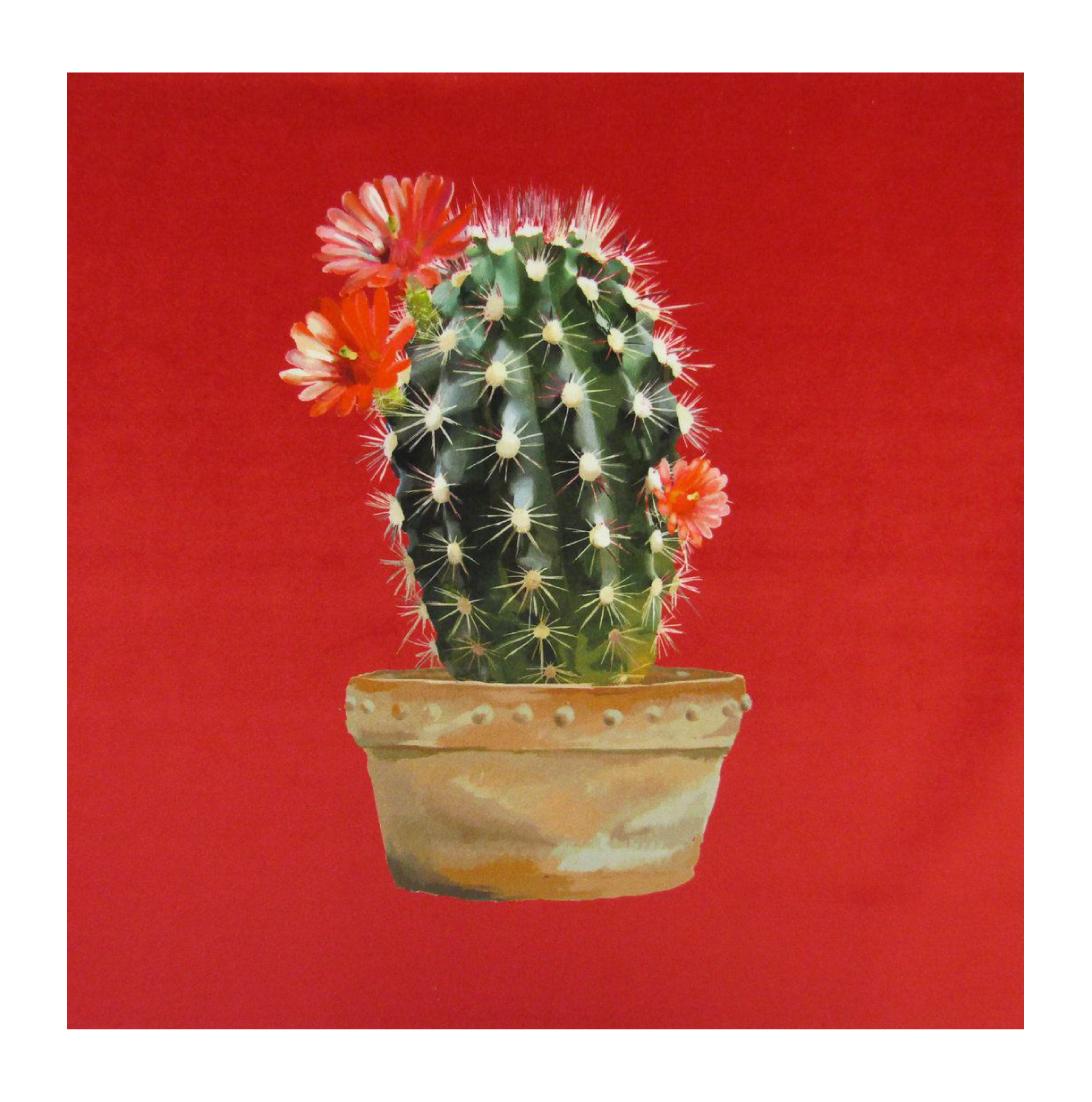 Cactus Strawberry - Velvet