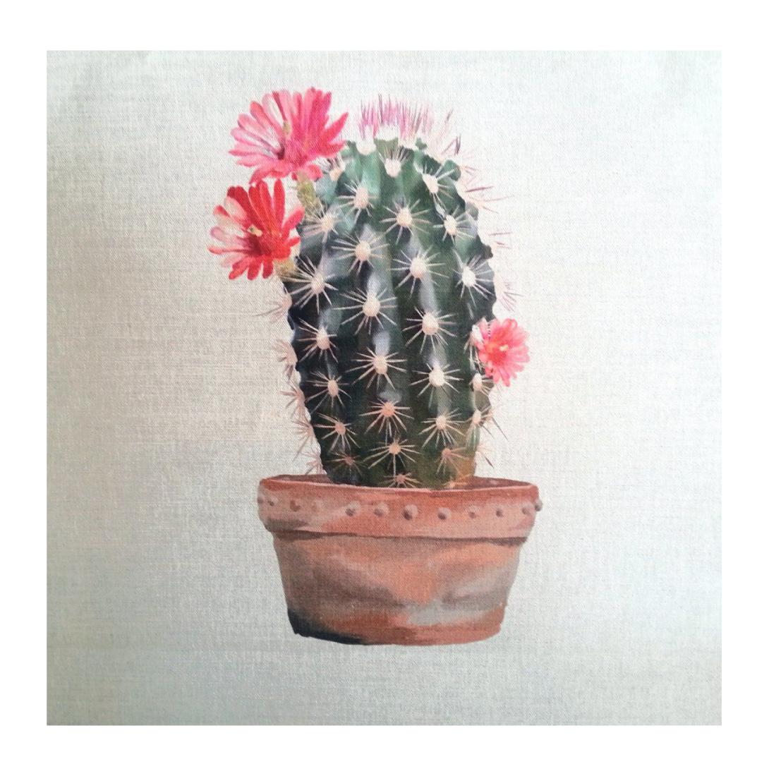 Cactus Echinocereus - Linen