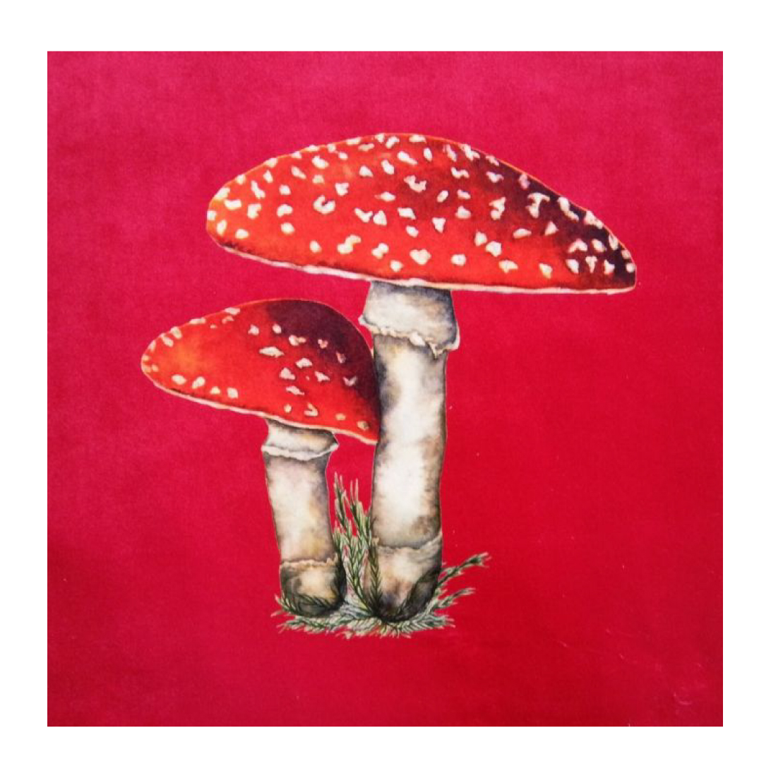 Toadstool Stawberry - Velvet