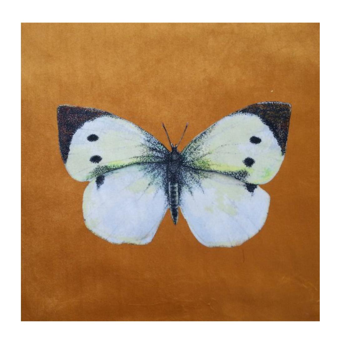 Butterfly (Cabbage White) Gold - Velvet