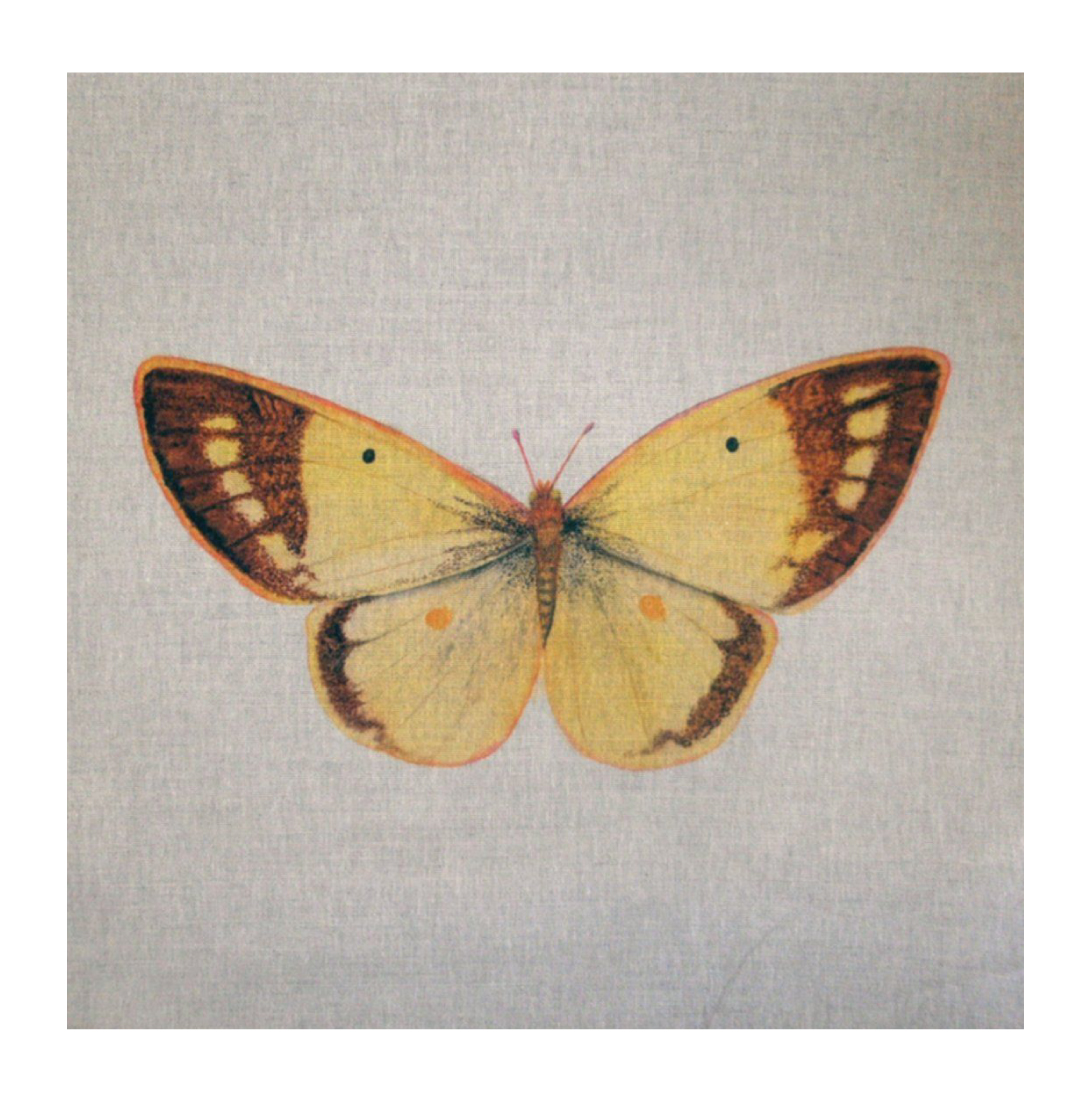 Butterfly (Clouded Yellow) - Linen