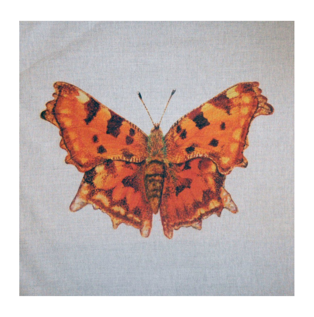 Butterfly (Coma) - Linen