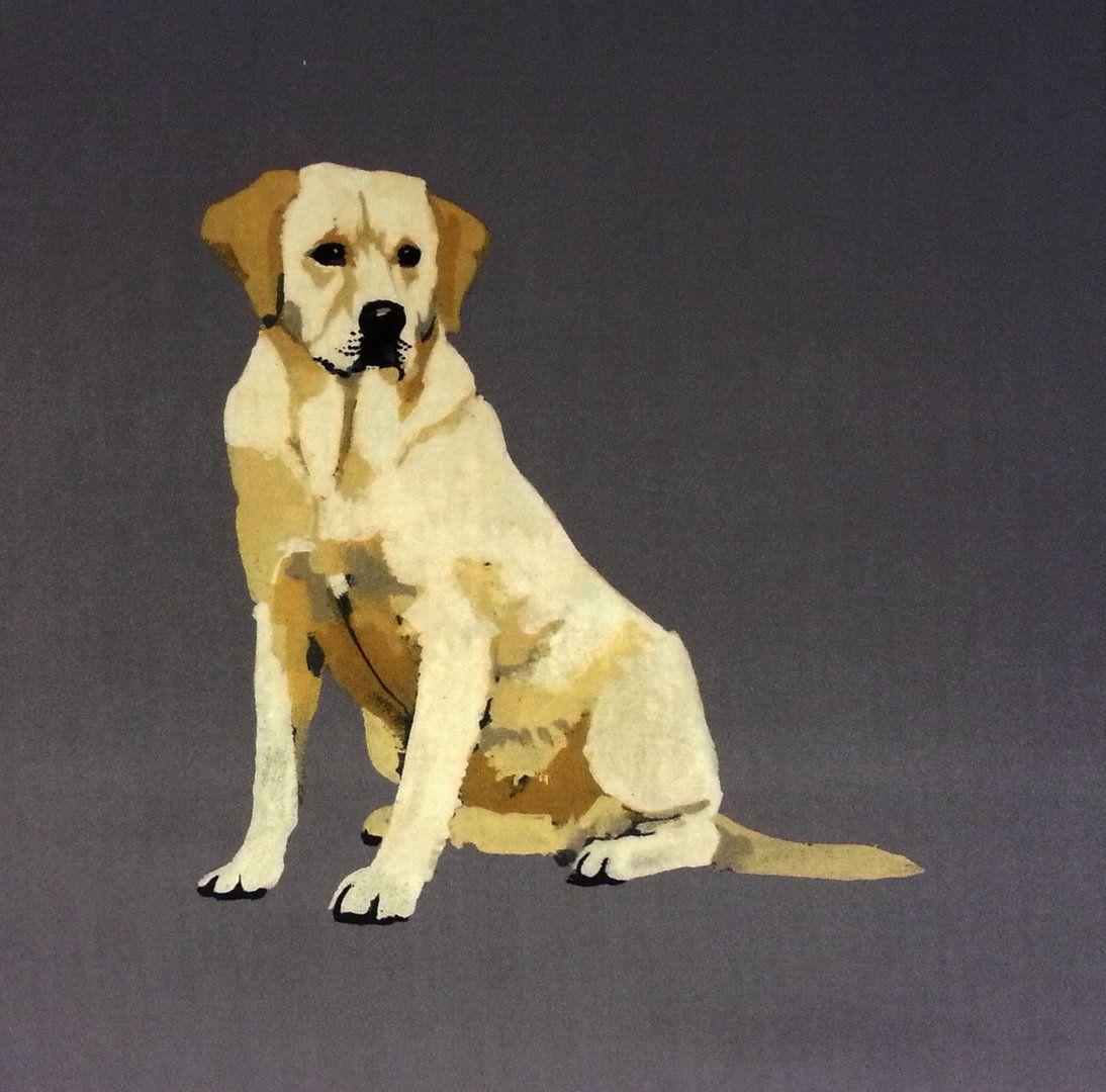 Labrador - Velvet