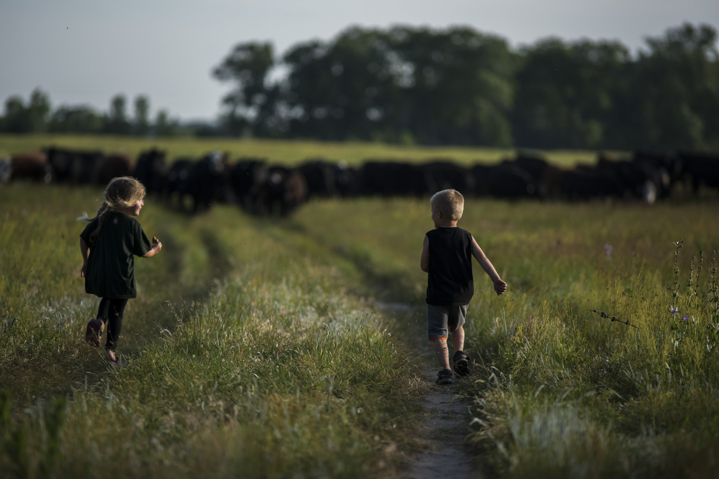 Cousins Leah and Trigg run towards a group of cows in the pasture during a family picnic.