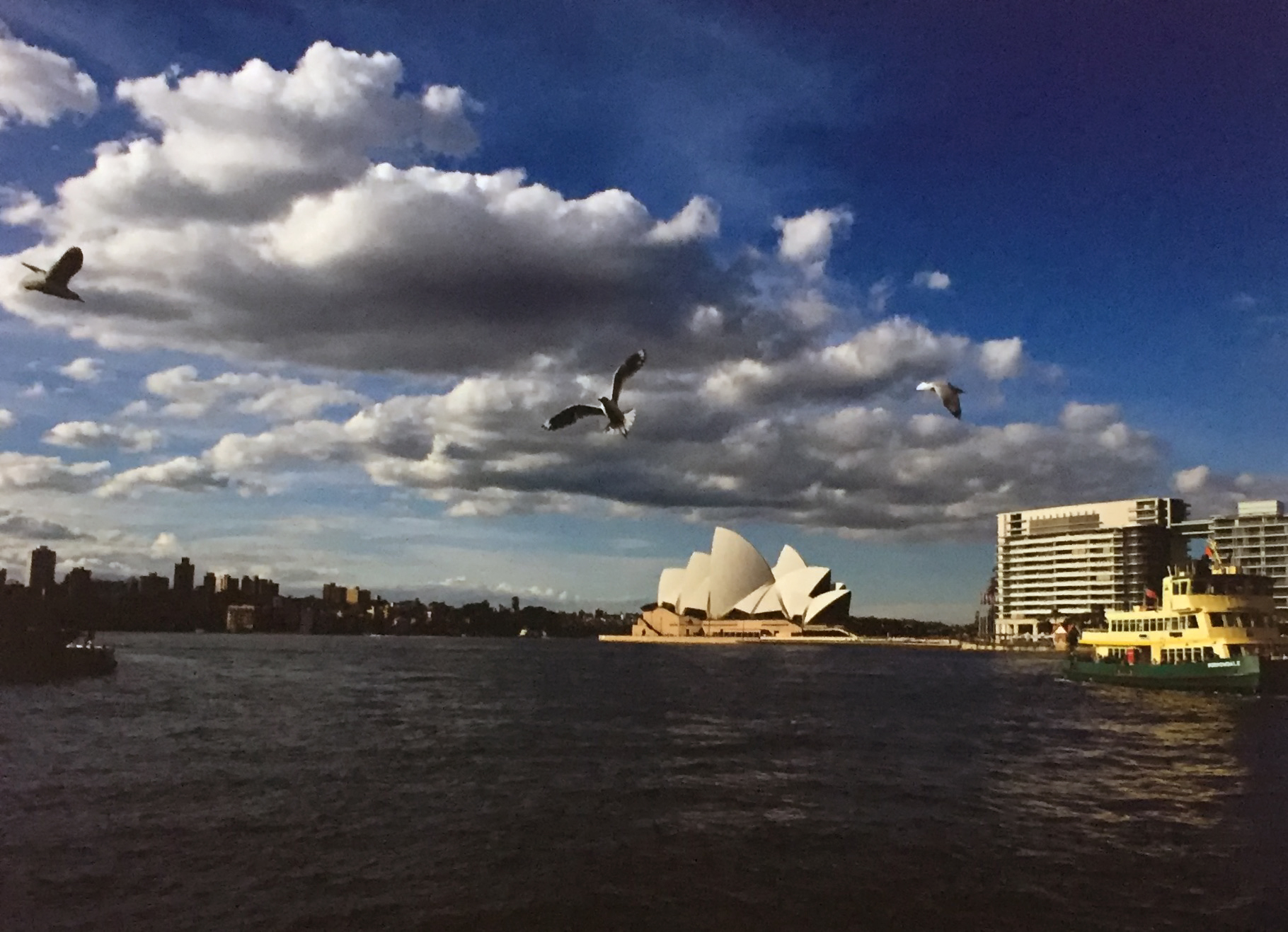 My first frame with the Nikon D3s of Sydney Harbor.