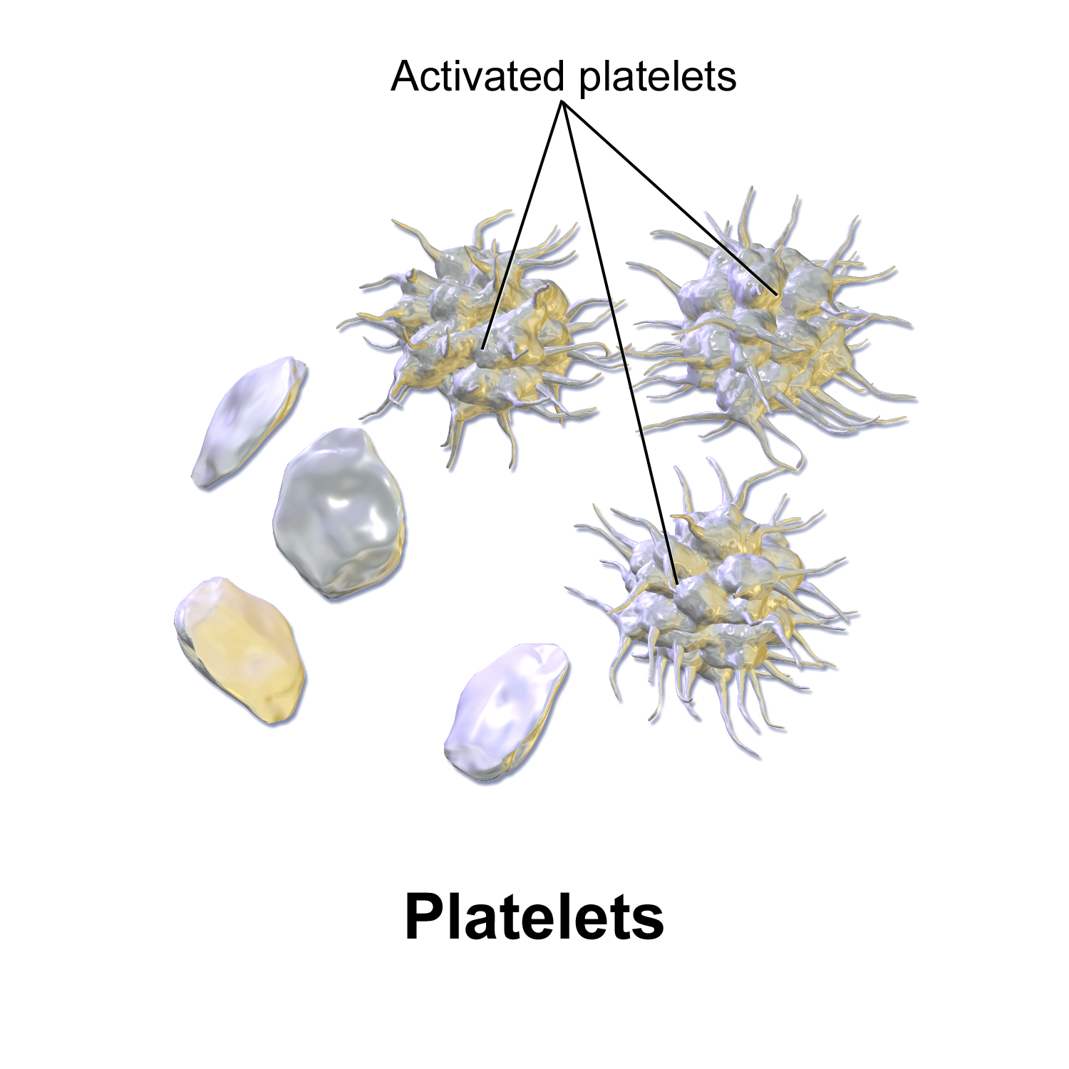 image source: https://commons.wikimedia.org/wiki/File:Blausen_0740_Platelets.png