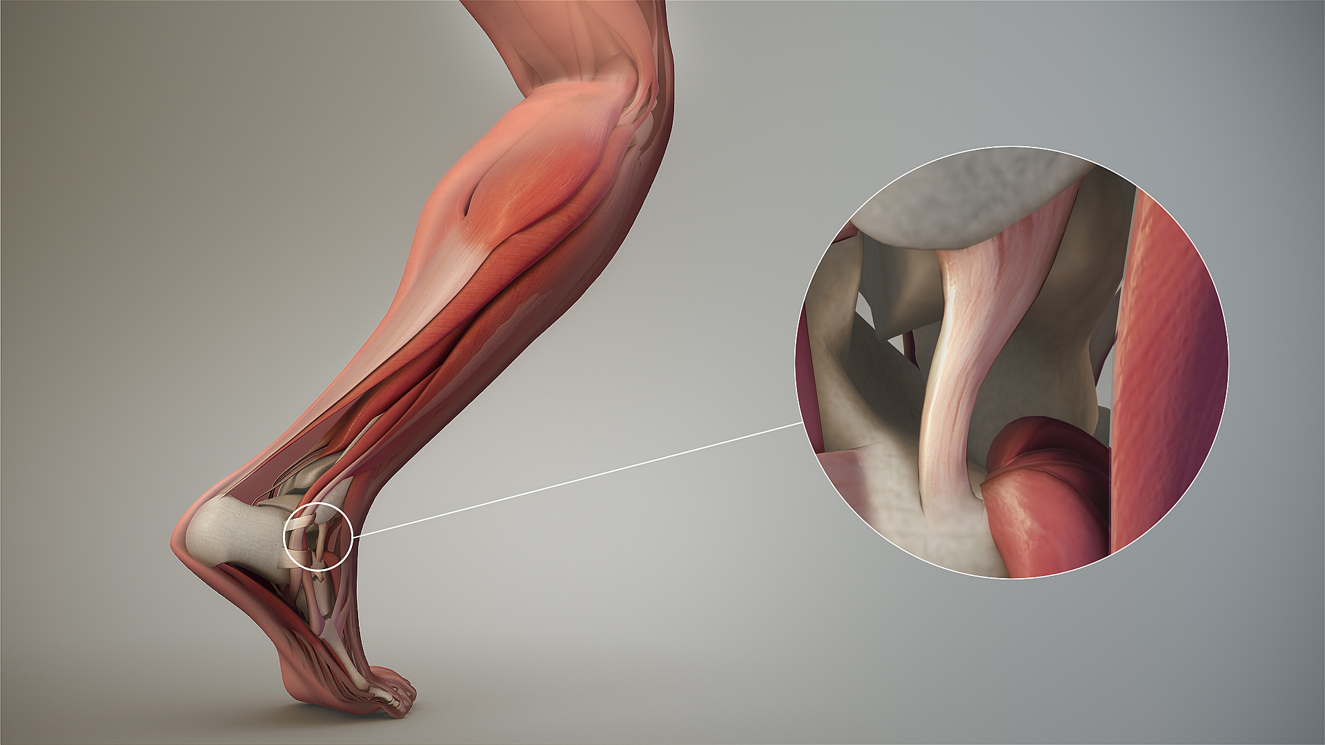 image source: https://en.wikipedia.org/wiki/Ligament