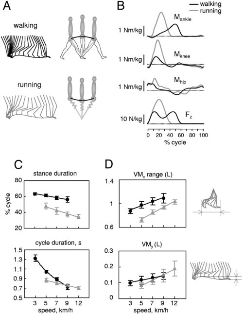 image credit:  Cappellini G ,  Ivanenko YP ,  Poppele RE ,  Lacquaniti F . Motor patterns in human walking and running.  J Neurophysiol.  2006 Jun;95(6):3426-37. Epub 2006 Mar 22.