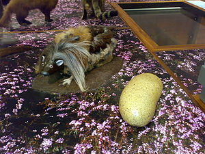 image source: https://en.wikipedia.org/wiki/Wild_haggis#/media/File:Haggis_scoticus.jpg