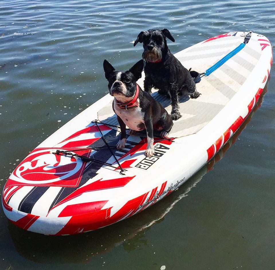 dogs on board.jpg