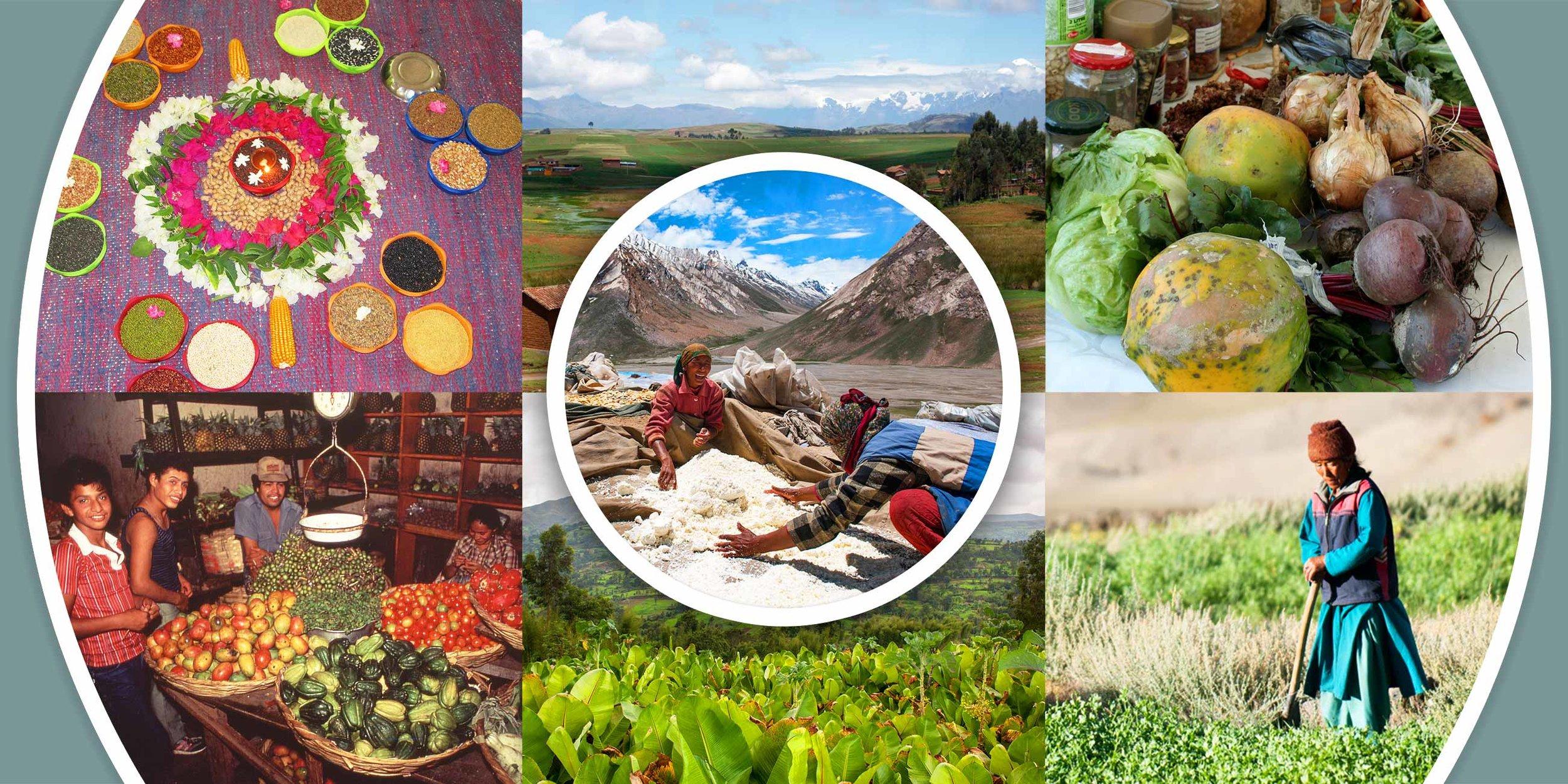 agroecology-fund-banner.jpg