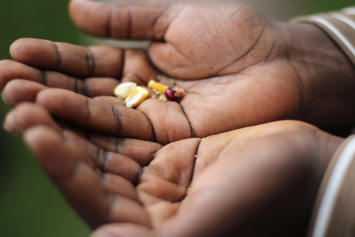 AFSA affirms the right of small farmers to have autonomy and control over their traditional seeds. Photo: Rucha Chitnis