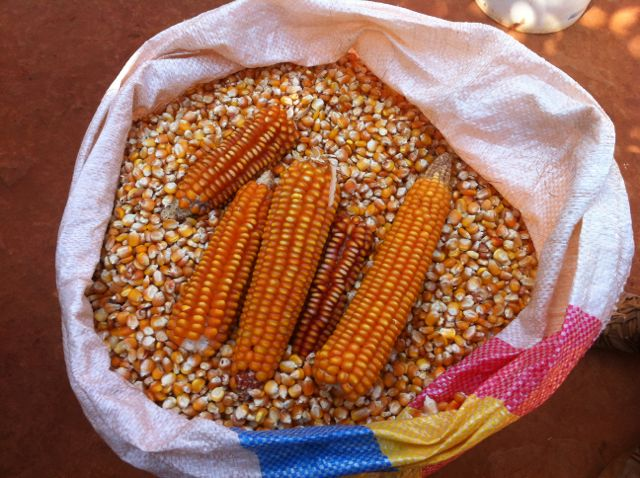 Photo by:Soil, Food, and Healthy Communities, Malawi