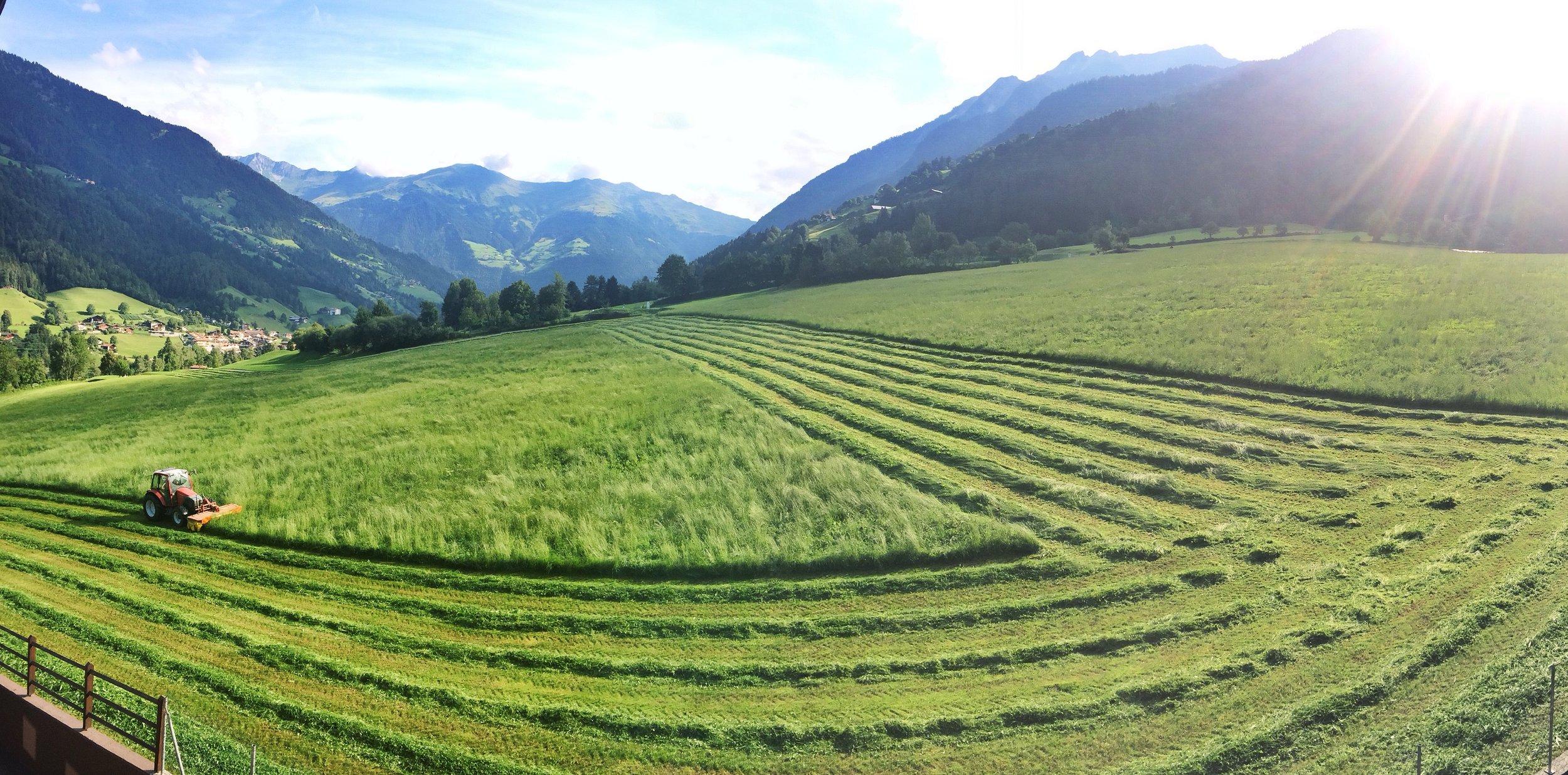 Südtiroler Wiese